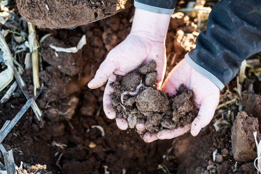 RN Hopper showcases his healthy soils as a result of the no-till and other conservation practices he and his father have implemented since 2004.
