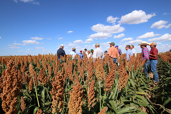Understanding new innovations is a large part of Leadership Sorghum.