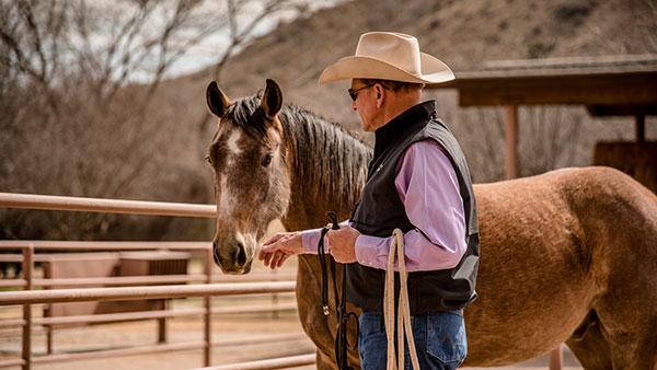 AQHA, horse, cowboy