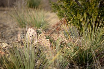 The landscape on the ranch land has a variety of plant species.
